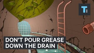 Why you should never pour grease down the drain by : Tech Insider