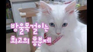 방울목걸이는 최고의 흥분제(no talking) 운동효과에 밤에 일찍자기까지!