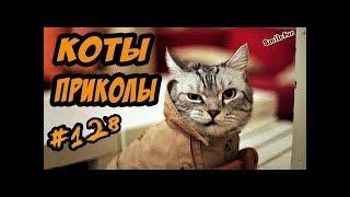 СМЕШНЫЕ КОШКИ ПРИКОЛЫ КОТЫ ДО СЛЁЗ 2018 Funny Cats