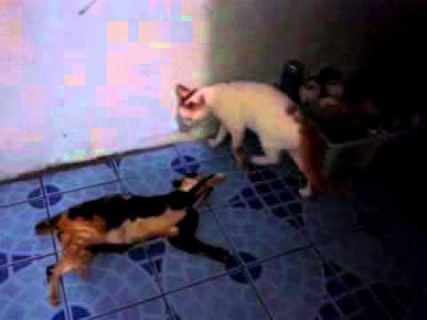 Video ( JANGAN DITIRU ) anak berkelahi sama mama nya