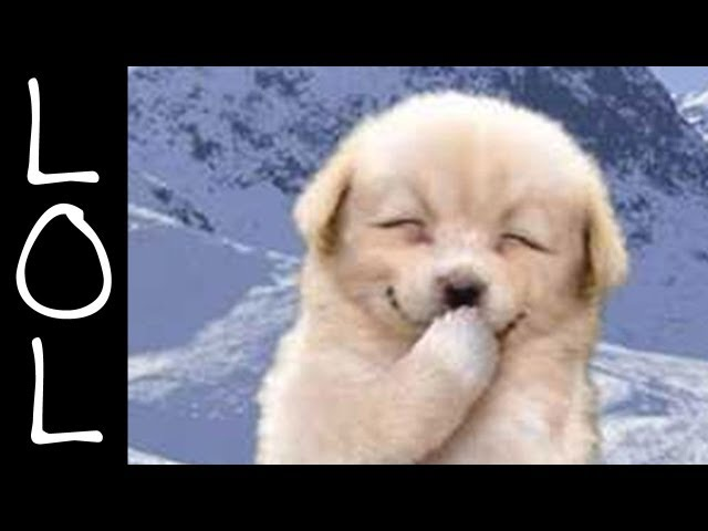 Funny Dogs - World's Funniest Dog Video Ever!