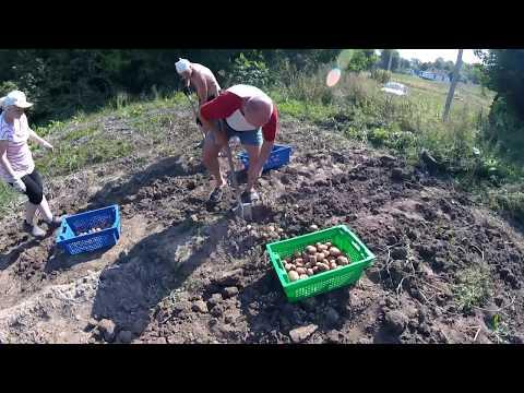 Собрали весь урожай картошки/тыквы/ погреб /хранилище. Сельская жизнь. Countryside.