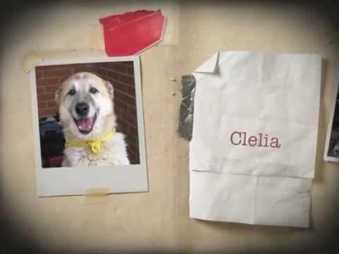 Clelia: cronaca di una coppa meritata