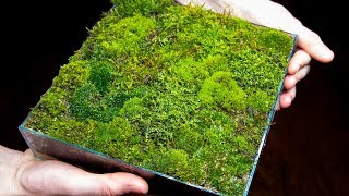 Making a Moss Garden from Scratch (Satisfying & Relaxing)