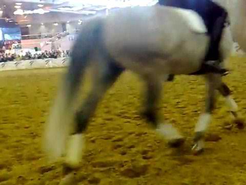 Salon du cheval PRE Horse-Liiberty-x3