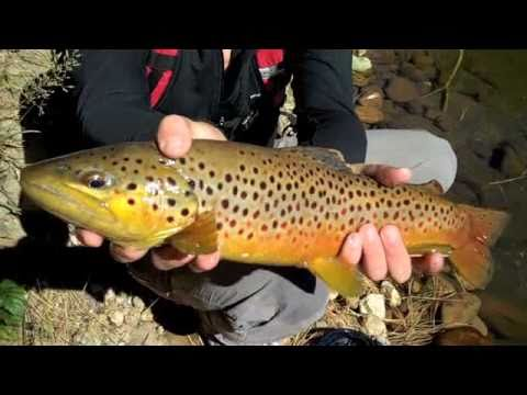 Off the Map Wilderness Fishing, AZ Big Brown Trout