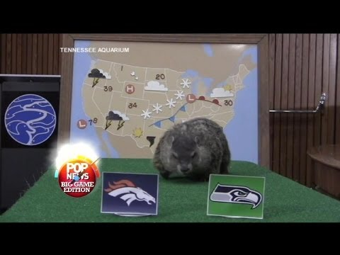 People Get Animals to Predict Super Bowl's Outcome