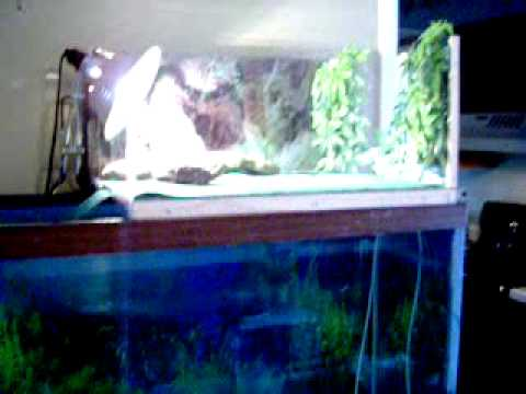My new above the tank basking area for my Painted Turtles--- ****READ DESCRIPTION****