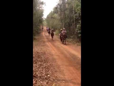 ไปไกลสุดขอบฟ้ากับพวกเรากลุ่มอนุรักษ์ม้าไทย