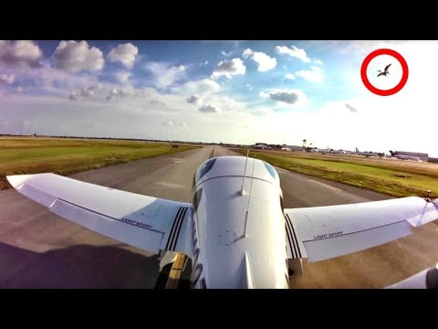 This Pilot Couldn't Believe What He Saw When Flying His Plane