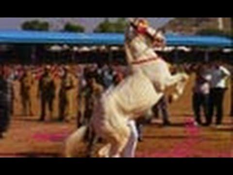 Dance performance by Horse, Pushkar fair