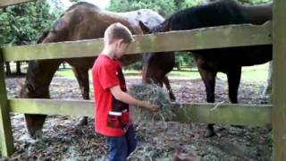 Feeding uncles horses