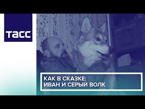 Как в сказке: Иван и серый волк
