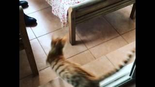 猫がガラスの扉を認識していない意外な習性。