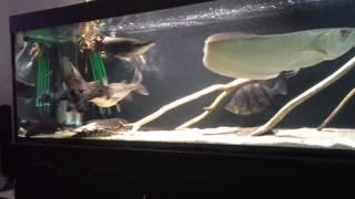 Интерактивный аквариумный туризм Сезон 2 Выпуск 1(Настоящие монстры)
