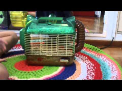 como domar o domestica a un hamster