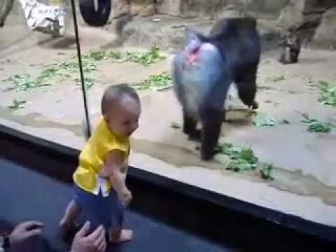 funny monkey And little boy's Amazing video