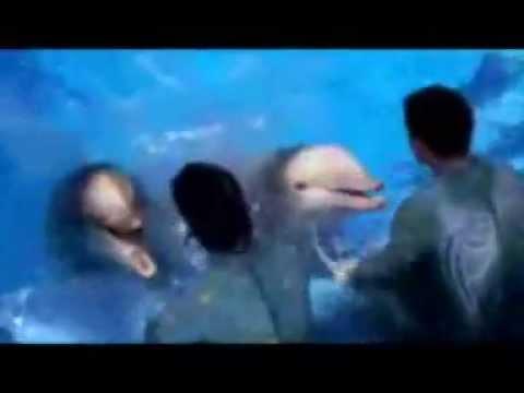 How Do I Become A SeaWorld Trainer?