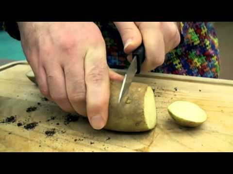 How to Clone a Potato | Biotechnology Learning Lab | The Children's Museum of Indianapolis