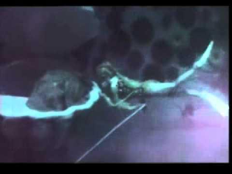MGR Songs-Aval oru navarasa-Ulagamsurtrum Valipan-.flv