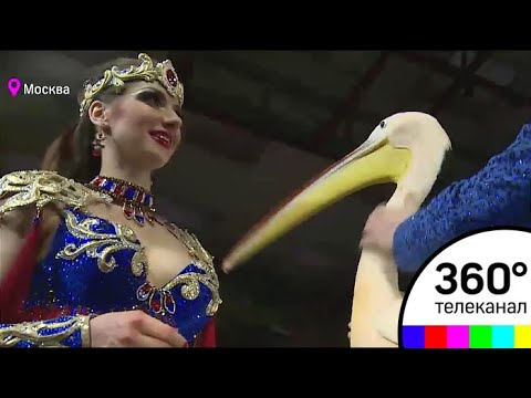 Премьера шоу Царевна-Несмеяна прошла в Большом Московском Цирке