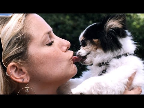 I Kissed A Dog (i Kissed A Girl - Katy Perry Parody) video