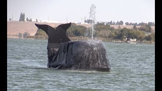 Meet the man behind the Moses Lake Whale