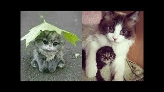 ♥Cute Cats and Kitten Doing Funny Things 2018♥    Funny Animals