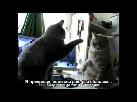 Коты играют в ладушки (Субтитры)