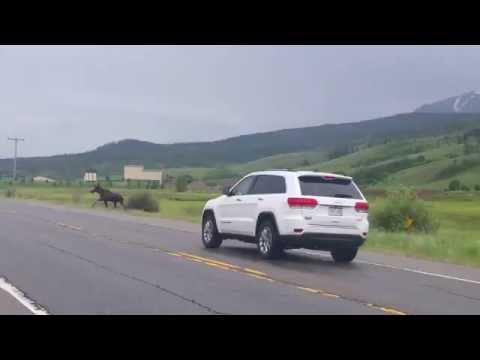 Un automovilista grabó un espectacular accidente y las imágenes sacudieron YouTube