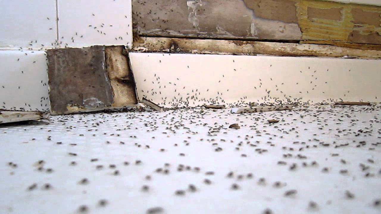 Is baby powder a reasonable way to get rid of ants  Quora