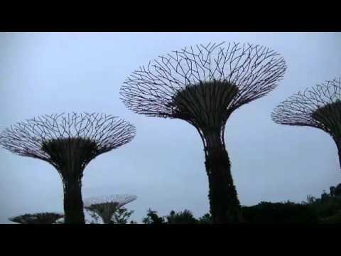 【News of Sing Sing】Singapore Big tree 【ニュースの森森】シンガポール ビックツリー