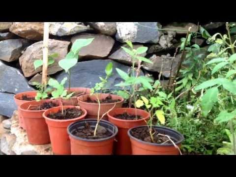 Z Magicznej Oazy spotkanie z Maria Bucardi - kultura mieszana,ogrod,uprawa warzyw,energia odnawialna