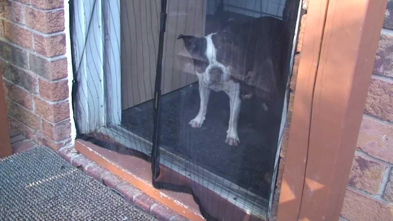Make Dog Door In Screen
