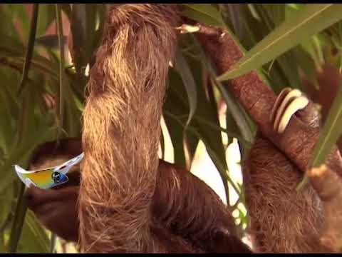 Falus Skateboards - Sloth Edit
