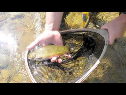 Fly fishing the saco river, New Hampshire