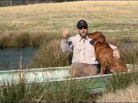 Dog Training Basics With Chris Akin video