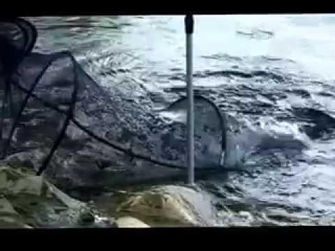 Рыбалка 53394 shouts весенняя рыбалка на