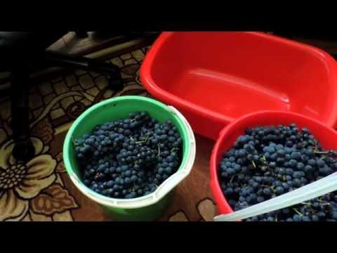 Как приготовить вино Изабелла - видео