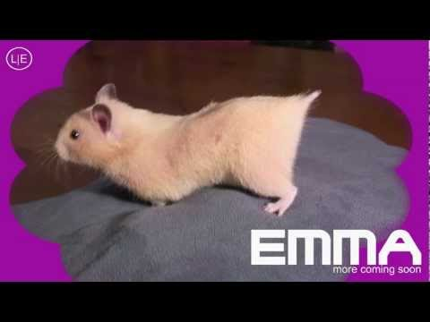 EMMA likes sex - Mrs. EMMA the HAMSTER (9) X NOM NOM