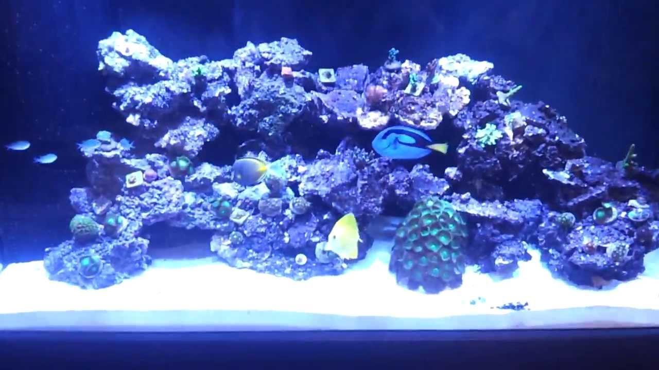 90 Gallon Reef Build Aquascape Update 9 Youtube