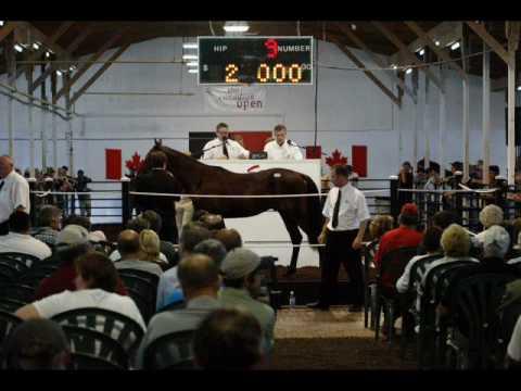 Ian Tyson - M.C. Horses