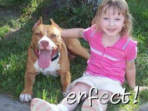 Pit Bull puppy dog grows up: SMILE!