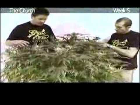 Green House Seed Co The Church Grow with Italian Subtitles
