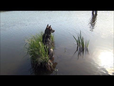 Ловля голавля на майского жука - 2