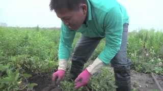 2013雲林農業博覽會甜度12影像展-永-林靖傑 黃俊淵導演(築巢築夢的地