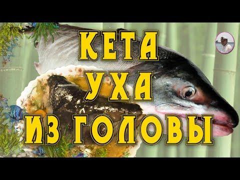 Кета рыба рецепты с фото