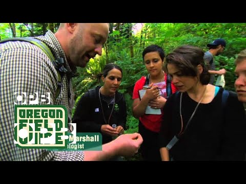 Oregon Field Guide: Forest Park BioBlitz