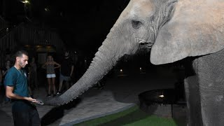 FEEDING a MASSIVE ELEPHANT at NIGHT!
