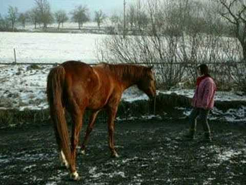 Horse And  Girl video
